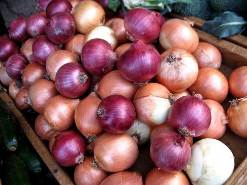 «ЛУК – от семи недуг»: что нужно знать об этом удивительном овоще