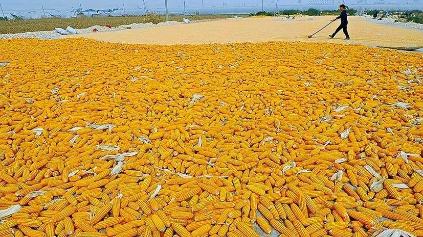 В США рассказали о пользе производства ГМО отравы на Украине