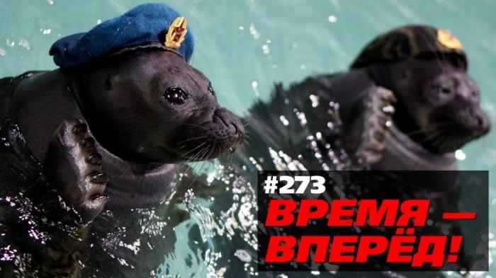 Главные открытия 2017 года: боевые тюлени, вечные дороги... Время-вперёд!