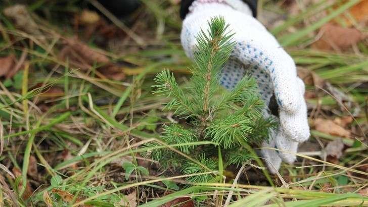 Что сделано вРоссии вгод экологии? Часть 1