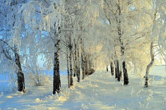 Красноярск сковали 24-градусные морозы. Город покрылся изморозью и инеем