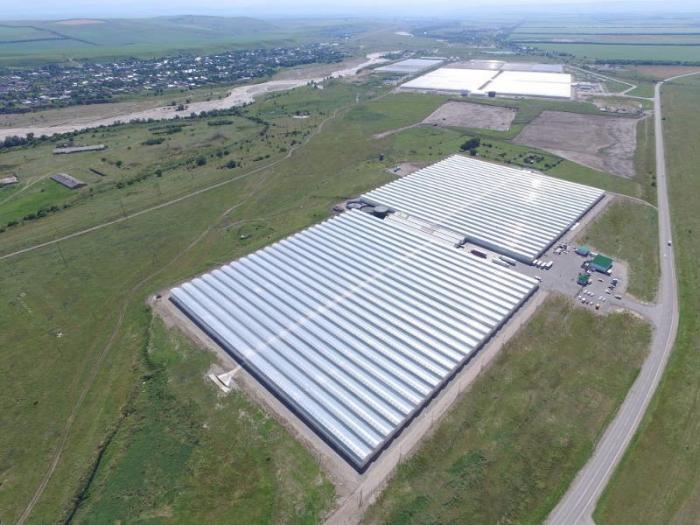 Агрохолдинг «Эко-культура» продолжает инвестировать в тепличное хозяйство