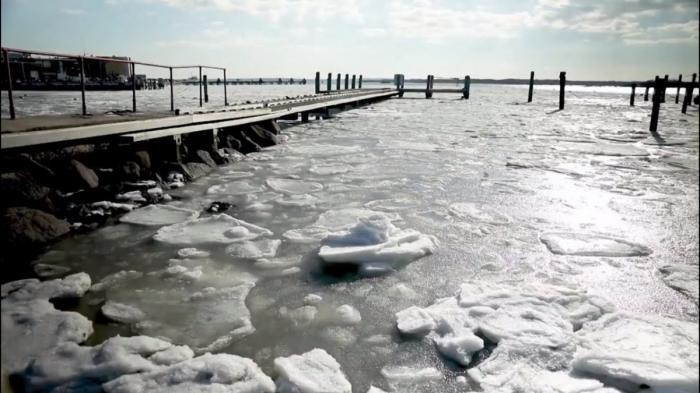 На востоке США океан покрылся льдом и замерзли крокодилы