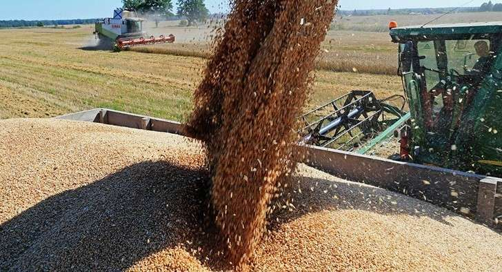 Урожай зерновых в2017 году составил 134,1 млн. тонн