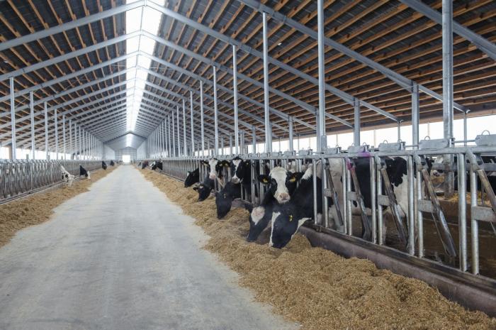 В Воронежской области «ЭкоНиваАгро» ввело в эксплуатацию молочный комплекс на2800 голов