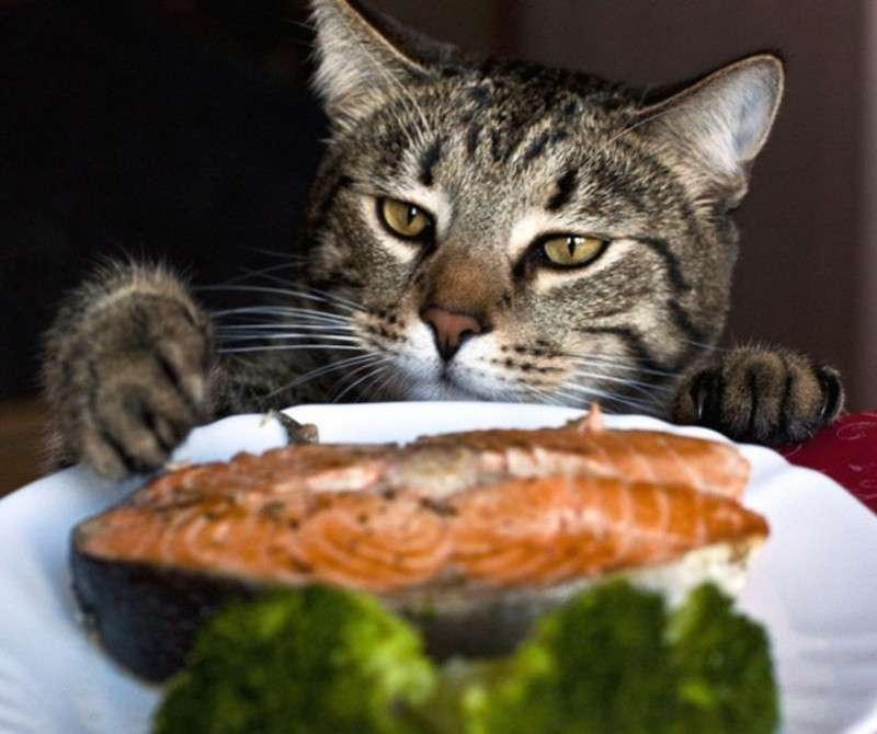 Коты, которых поймали на месте преступления – 45 отчаянных фотографий