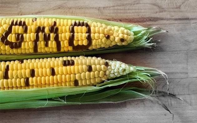 Пиндосы обвинили Россию в создании барьеров для ГМО отравы из США