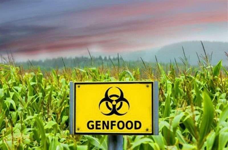 Киевское еврейство превращает Украину в житницу ГМО отравы в обмен на кредиты