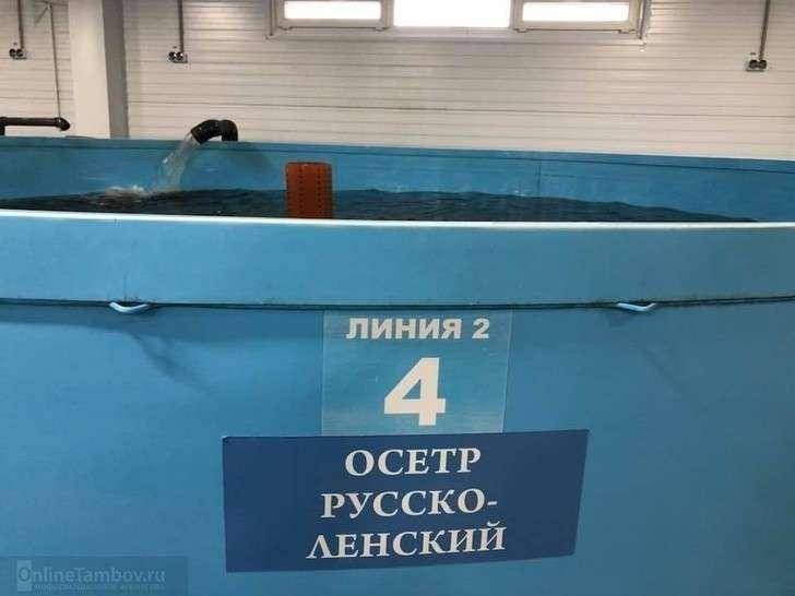 ВТамбовской области открылся комплекс потоварному производству осетра ифорели