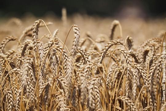 Без ГМО: Россия будет покорять мир органическим зерном