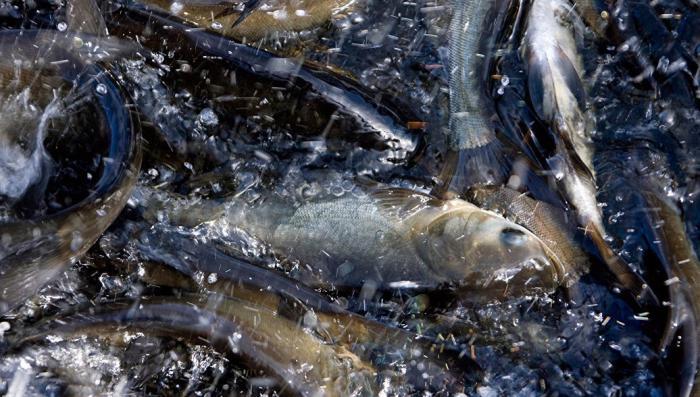Норвегии оказалось некуда продавать свою рыбу, кроме как в Россию