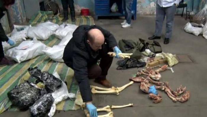 На российско-китайской границе изъяли партию контрабанды из 867 медвежьих лап