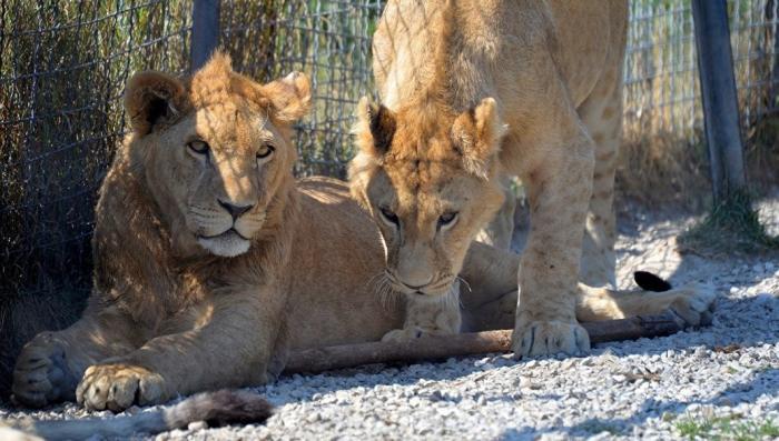Матриархат и патриархат: что выгоднее для выживания в дикой природе?