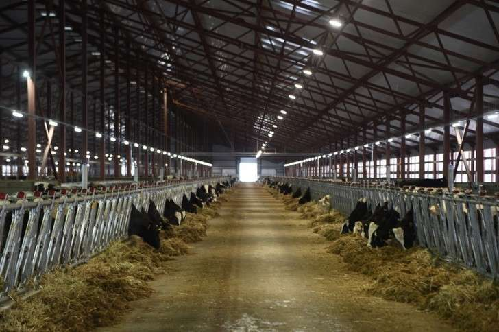 Ферма на1200 голов открыта вПодмосковье