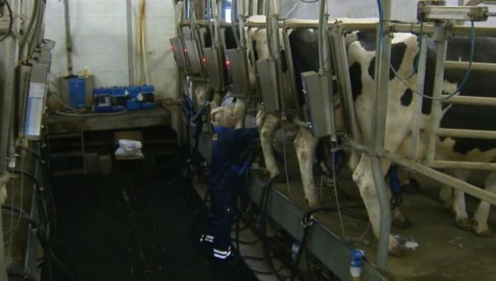 В России запретили разливное белорусское молоко и молочную продукцию
