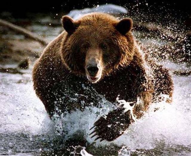 Русский медведь долго сосредотачивался. Теперь он прыгнул