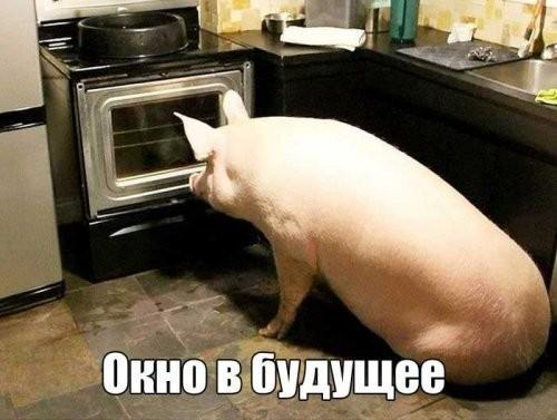 Ростовщики МВФ идут собирать дань с Украины. Время пришло отдавать землю!