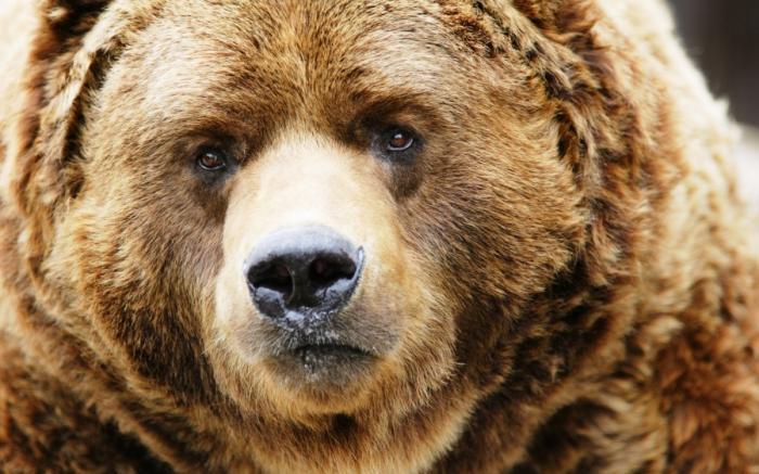 Западные охотники на медведя и отрезвляющая зима