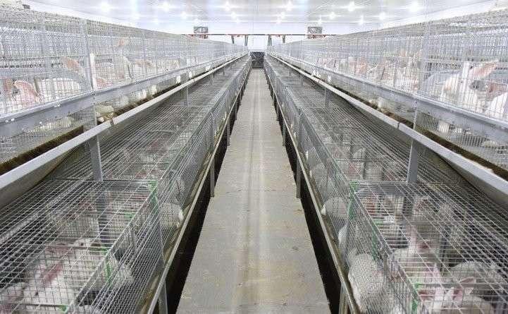 Кролиководческое хозяйство ООО «Оренбургский кролик» вышло на проектную мощность Хорошие, добрые, новости, россия, фоторепортаж