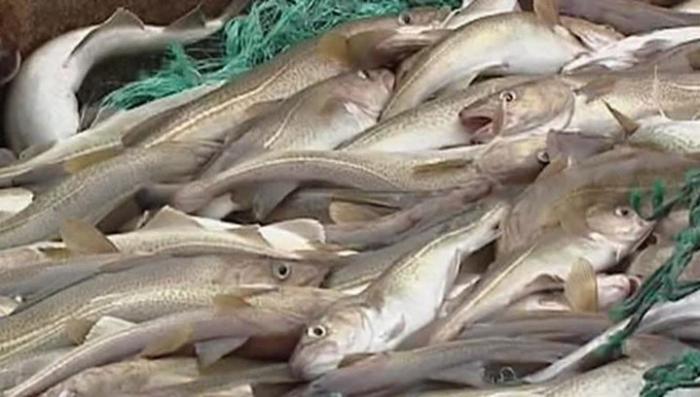 Будьте осторожны! В Россию разрешили ввоз рыбы с Фукусимы