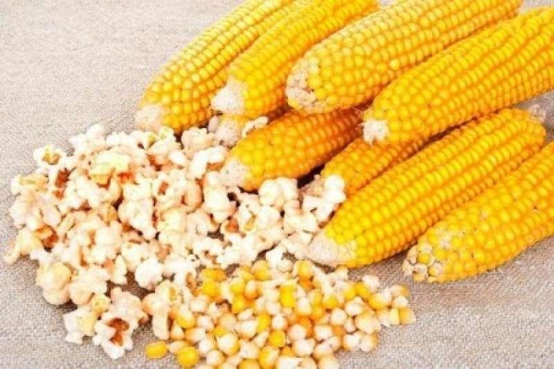 Украина отменила санитарный контроль и тут же получила из США зараженную кукурузу