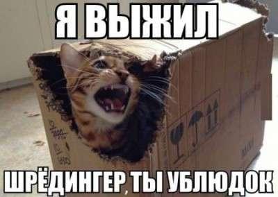 Гройсман, Вальцман, Супрун и кот Шрёдингера