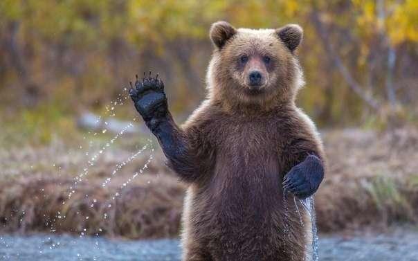 Русский медведь, как атрибут российского государства