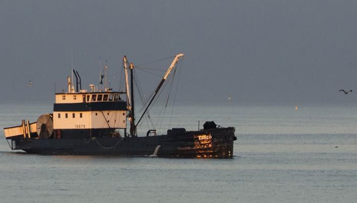 ФСБ будет бороться с украинскими браконьерами и пиратами в Азовском море