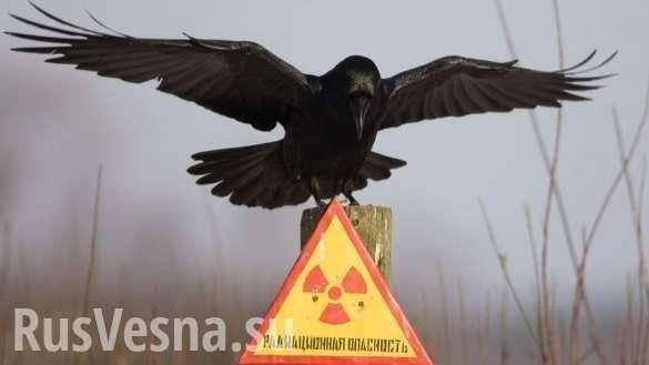 Укрохунта отбирает льготы у ликвидаторов Чернобыльской аварии  | Русская весна