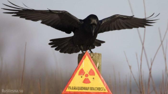Укрохунта отбирает льготы у ликвидаторов Чернобыльской аварии