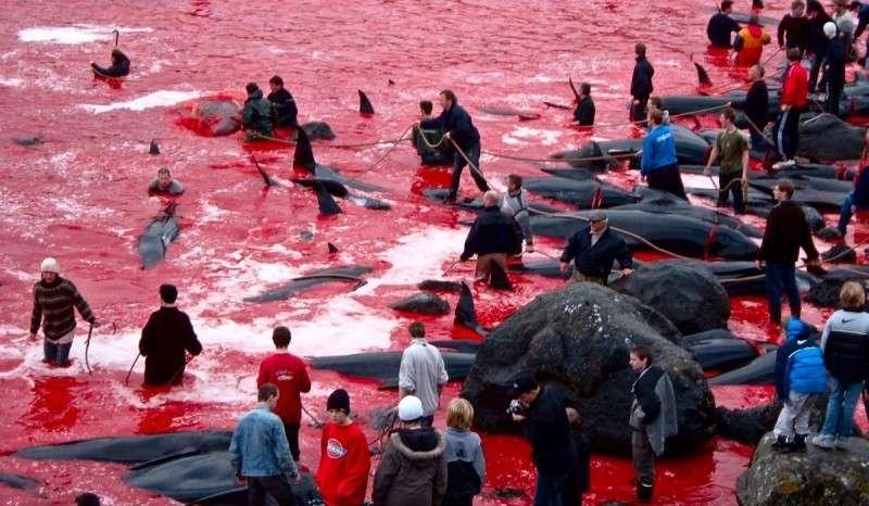 Массовые убийства, как часть паразитической культуры Дании