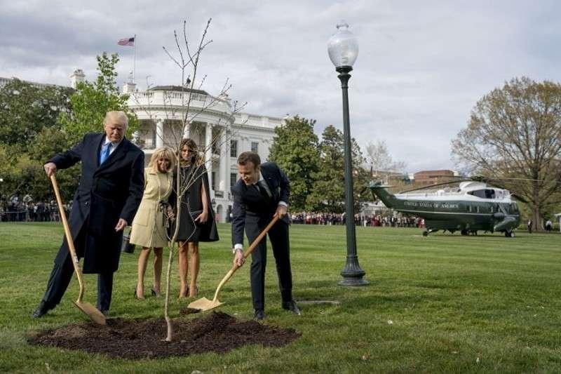 Вашингтон. С лужайки у Белого дома таинственно исчез посаженный Трампом и Макроном дубок