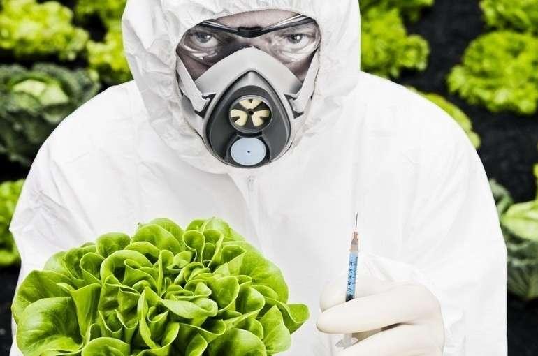 Три основных лжи биотехнологических компаний продвигающих ГМО отраву