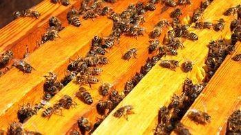 Капитализм убивает пчёл! А вместе с ними – всю нашу планету