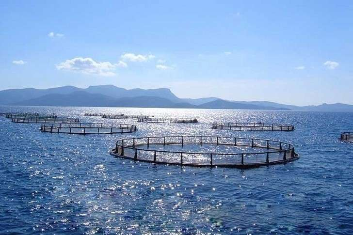 ВКрыму за1 квартал 2018 года производство товарной аквакультуры выросло в3,5 раза