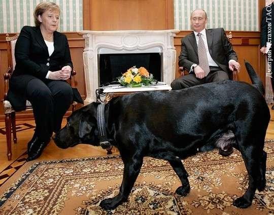 Почему галантность Владимира Путина превратилась в Германии в «оскорбление»