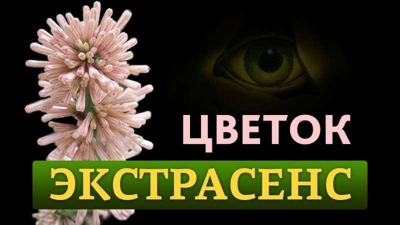 Разумная жизнь растений. Цветок экстрасенс