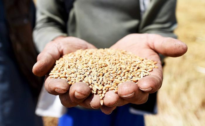 Египет не хочет закупать «грязный» русский хлеб