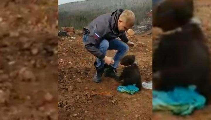 Сахалин: маленький голодный медвежонок отобрал пакет с едой у жителя