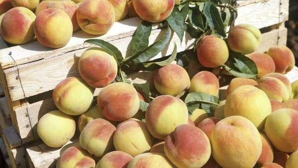 Персики. Архивное фото