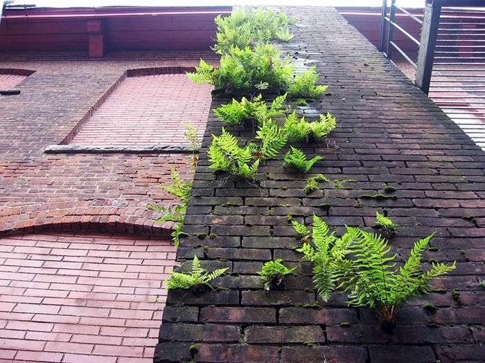 Растения, пробивающиеся сквозь асфальт.