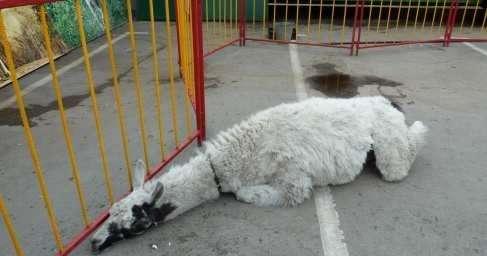 Лагерь смерти для животных: приехавший в Рязань передвижной зоопарк шокировал всех