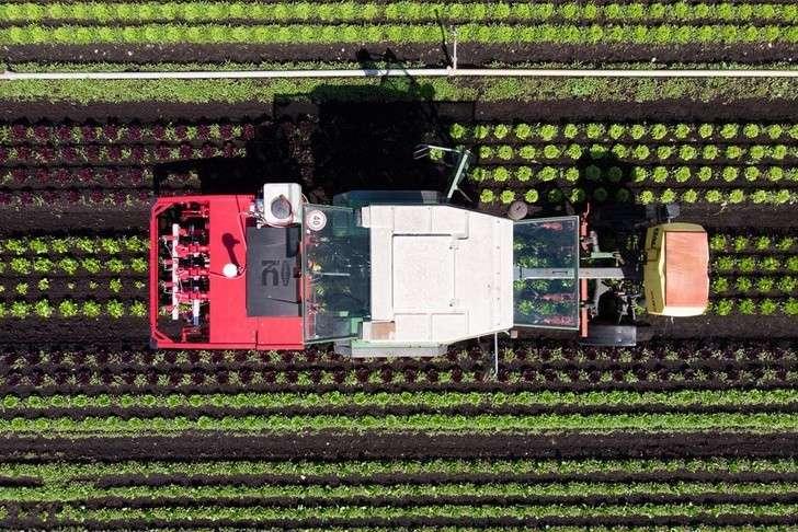 Новые технологии устремились в сельское хозяйство. Фото: EPA