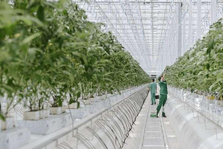 ВВоронежской области открыли тепличный комплекс 5-го поколения