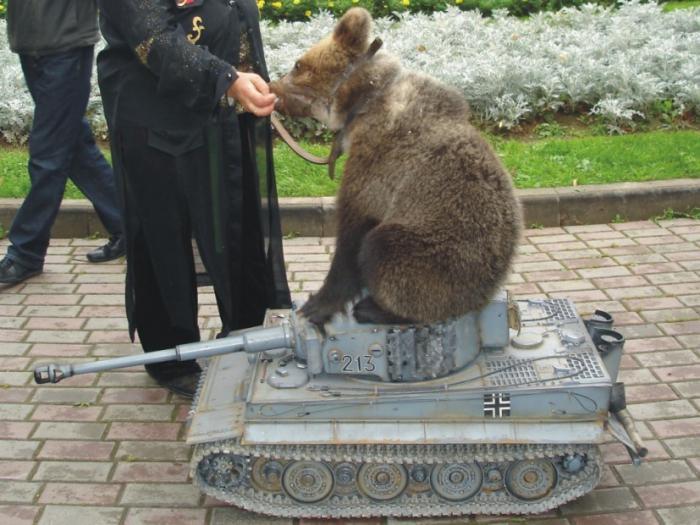 Радиоперехват кривоголовых танкистов ВСУ: хоть один танк умеет стрелять? +18