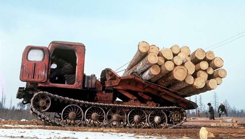 Китайцы спилили весь Дальневосточный лес. Факты