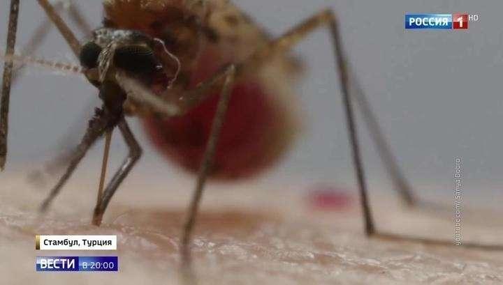Малярия, денге, желтая лихорадка: как не привезти из отпуска смертельный