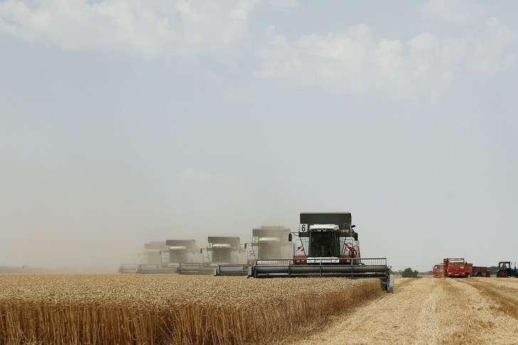 НаКубани собрали рекордный урожай зерновых
