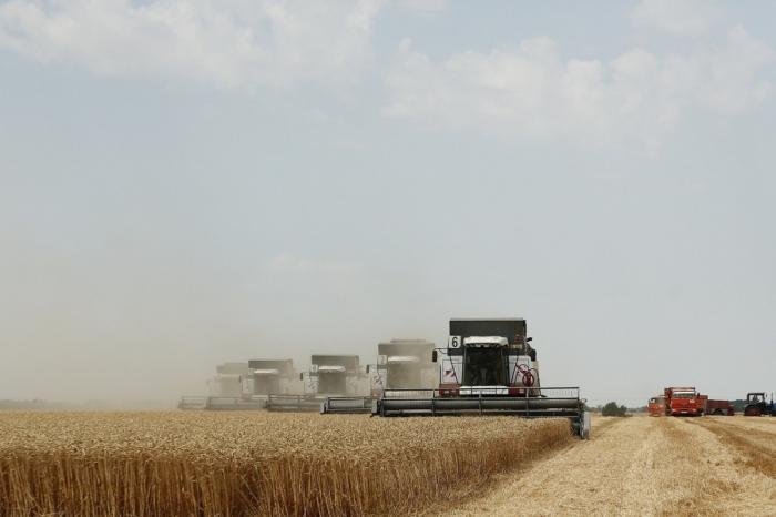 Кубань. Аграрии собрали рекордный урожай зерновых
