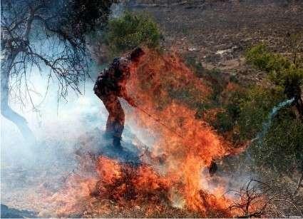 Будни Палестины: поджоги и уничтожение урожаев еврейскими оккупантами